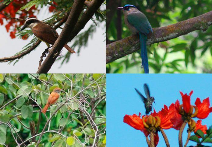 especies de aves Medellín