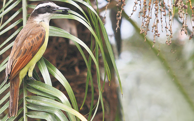 fauna silvestre en Medelllin