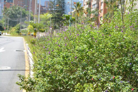 Visite los jardines de mariposas en la loma de Los Parra