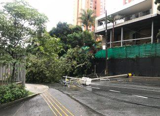Árbol caído Santa María de Los Ángeles