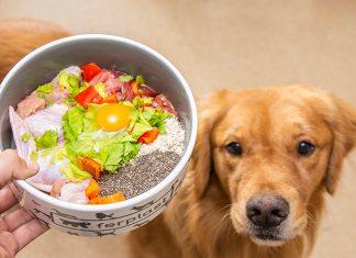 Alimentación natural para perros y gatos incluye proteínas crudas y vegetales. Una alimentación variada y digna para nuestras mascotas.