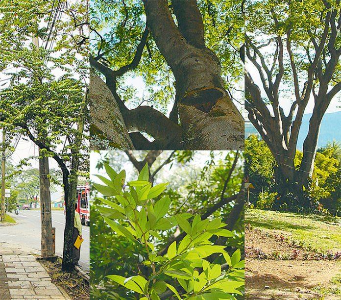 """""""Los árboles y los espacios verdes contribuyen a humanizar la ciudad""""."""