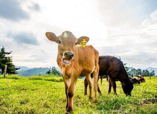 la ganadería industrial genera más emisiones de gases efecto invernadero que el sector del transporte