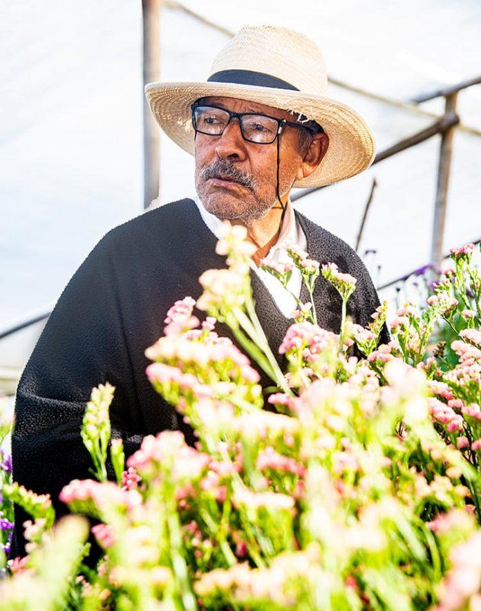 La tradición silletera en la Feria de las Flores y el Desfile de Silleteros