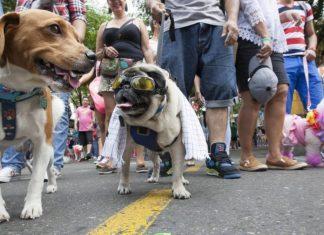 Caminata canina