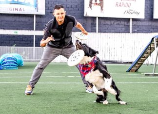 Disc dog en Colombia: Lincoln un border collie es el rey