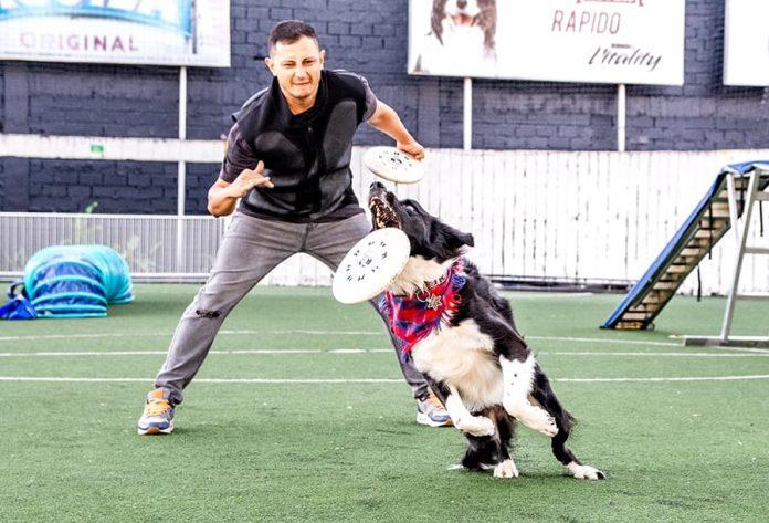 Disc dog en Colombia: Lincoln un border collie es el rey