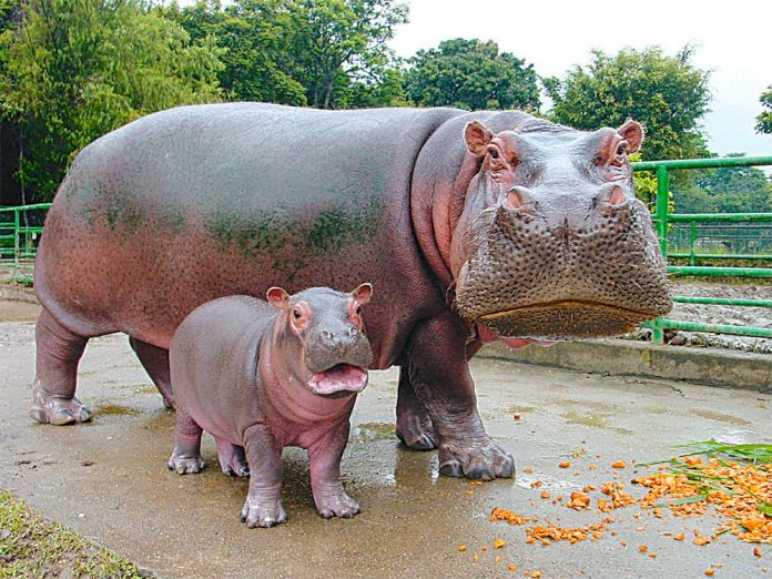Zoológico Santa Fe #tbt gigante
