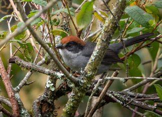 Avistamiento de aves en Colombia En búsqueda del tesoro
