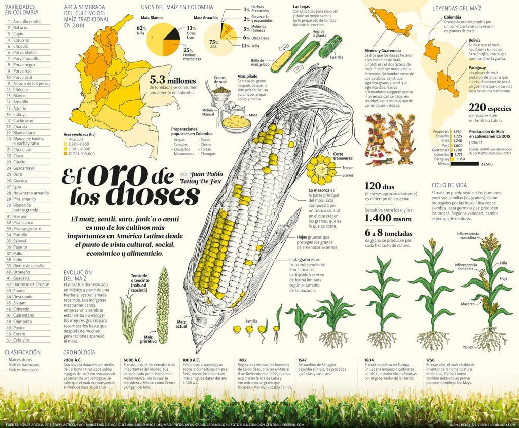 ¿Cuál es la historia de maíz? Infografía Maiz