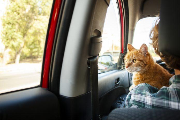 ¿Qué hacer con las mascotas si sale de viaje en vacaciones?
