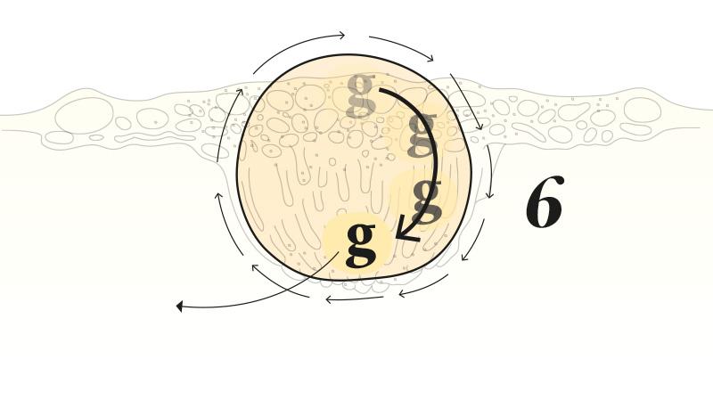 buñuelo cede ante la fuerza gravitacional y gira