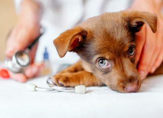 Consejos de cuidados para mascotas y los amos