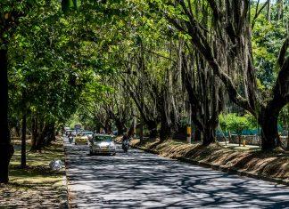Túnel Verde: seguirá la tala