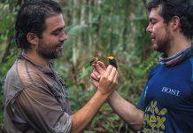 Diego Calderón, un experto avistador de aves en Colombia, lidera Pajariando con Farc