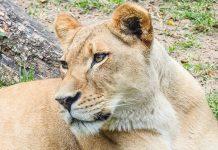 conservación, reproducción y liberación de especies