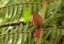 El Rastrojero una nueva ave avistada en Alto de San Miguel