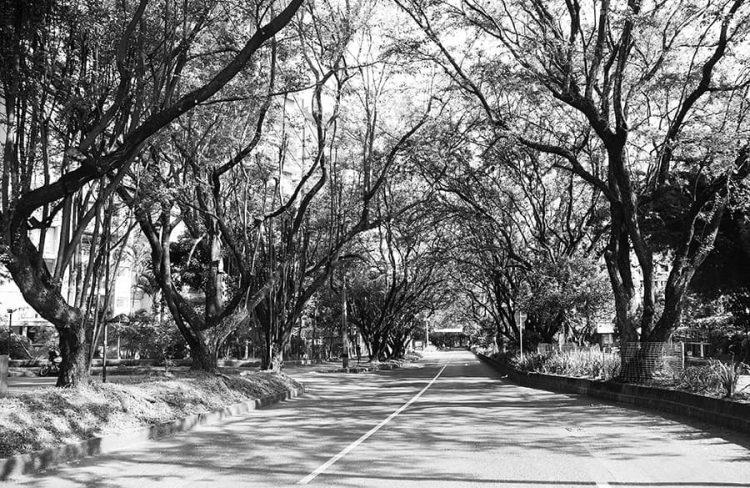 Antes y después de la tala de árboles en la carrera 43A de Envigado. Fotos: cortesía Alejandro Álvarez Vanegas