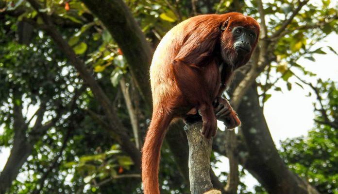 Donaciones para el Zoológico de Medellín