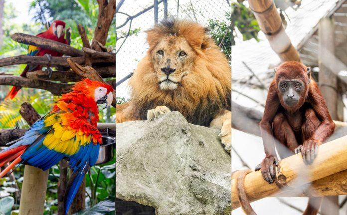 Zoológico Santafé alimento animales