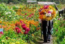 Feria de las Flores Covid-19