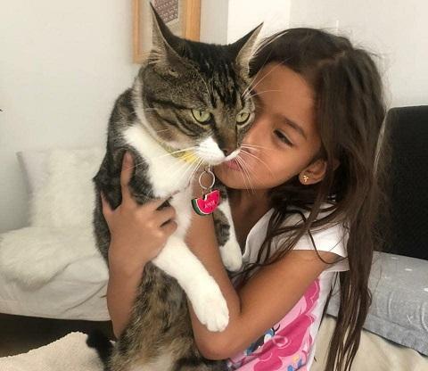 Apareció el gato Amor
