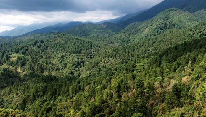 Conéctese con los Bosques Andinos
