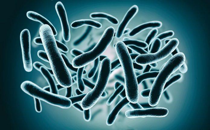 Bacterias extremas en El Parque Explora