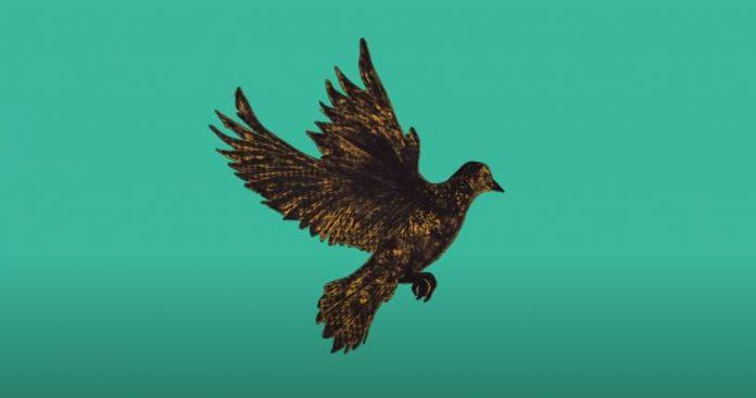 Exposición virtual paloma Negra