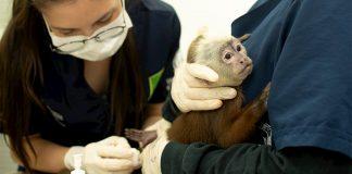 Fauna rescatada por la Universidad CES y el Área Metropolitana
