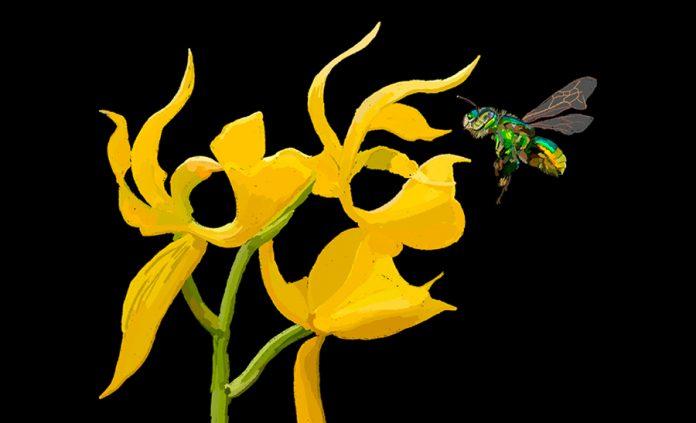 Charla y taller de dibujo: orquídea