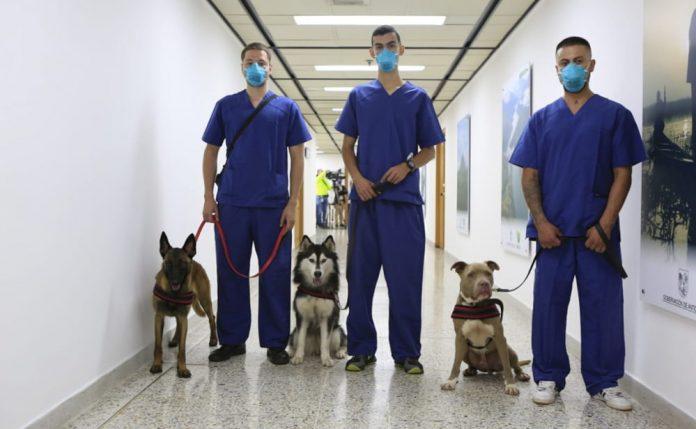 Investigación busca demostrar que los perros pueden diagnosticar la COVID-19.