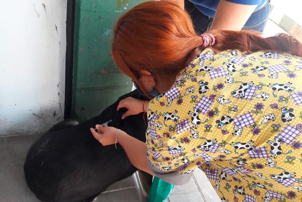 Jornada de vacunación Animal universidad CES