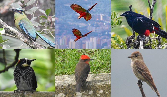 Temporada de aves en Medellín y el Valle de Aburrá