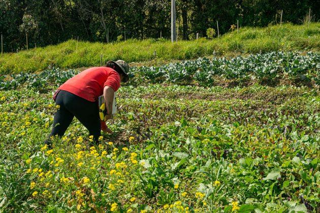 SiembraViva: agricultura orgánica certificada