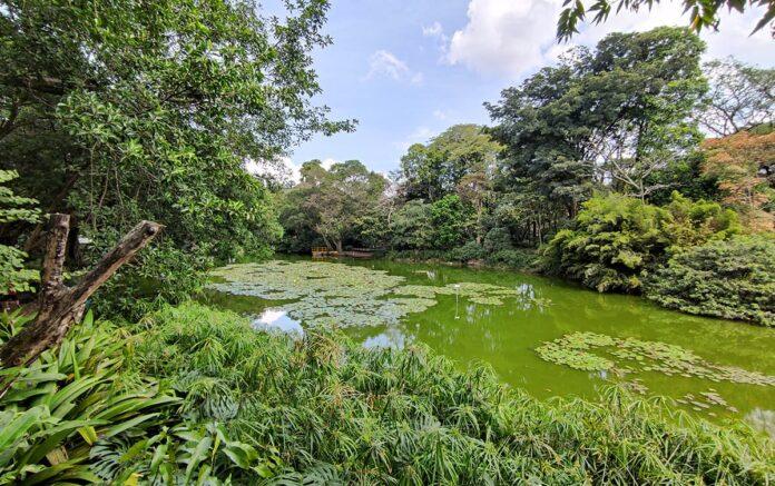 Crisis en el Jardín Botánico de Medellín causas, inversión y proyecciones