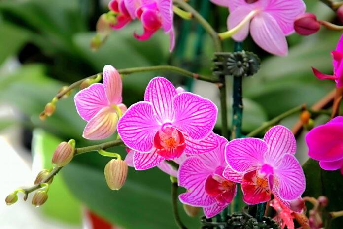Orquídeas. Foto: twenty20photos en EnvatoElements