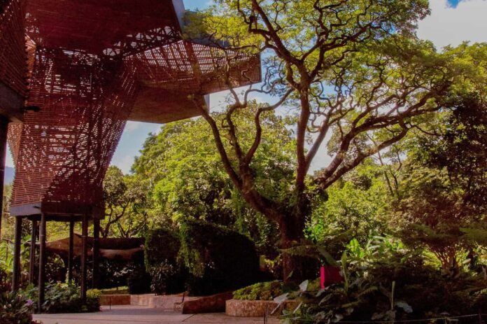 El Jardín Botánico de Medellín lanza un S.O.S