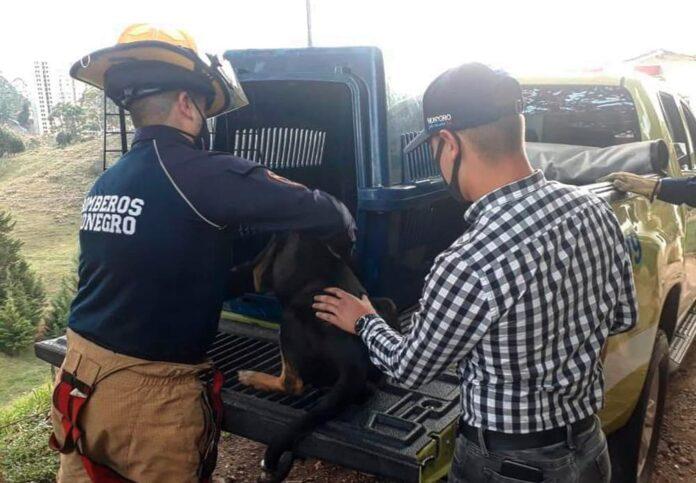 Envenenamiento de ocho perros en Rionegro