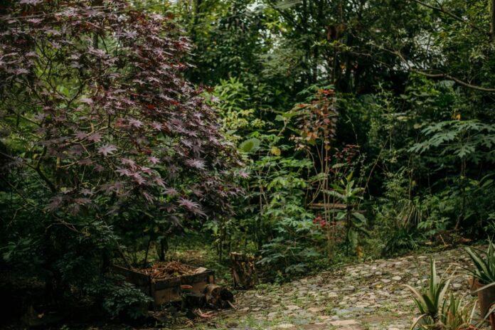 Carta desde el bosque