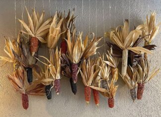 El maíz, grano dorado que legaron las divinidades a los seres humanos