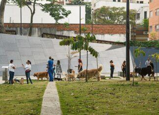 Las mascotas han ido ocupando un lugar esencial en los hogares colombianos