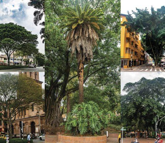 El Poblado es la comuna en Medellín con mayor número de árboles patrimoniales