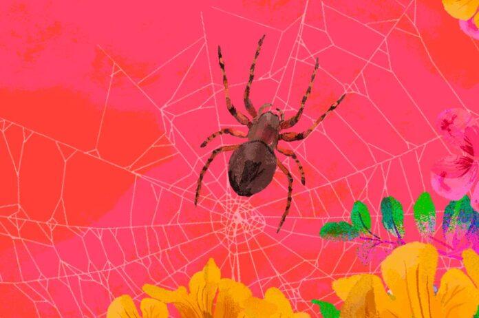 Divertirse con arañas y plastilina