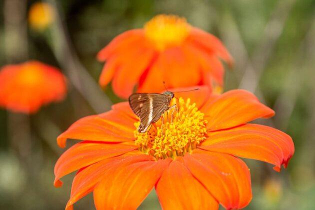 Una vida dedicada a las mariposas