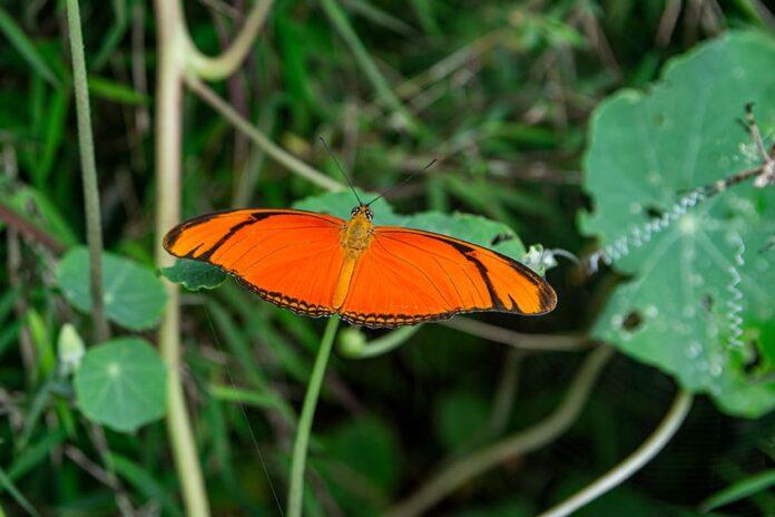 En la Loma del Esmeraldal, en Envigado, existe el Parque Las Mariposas,