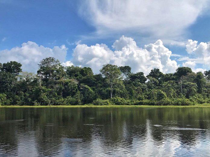 Una expedición al Amazonas para maestros y maestras