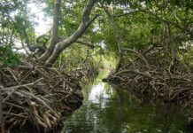Reserva natural Sanguaré, al norte del Golfo de Morrosquillo