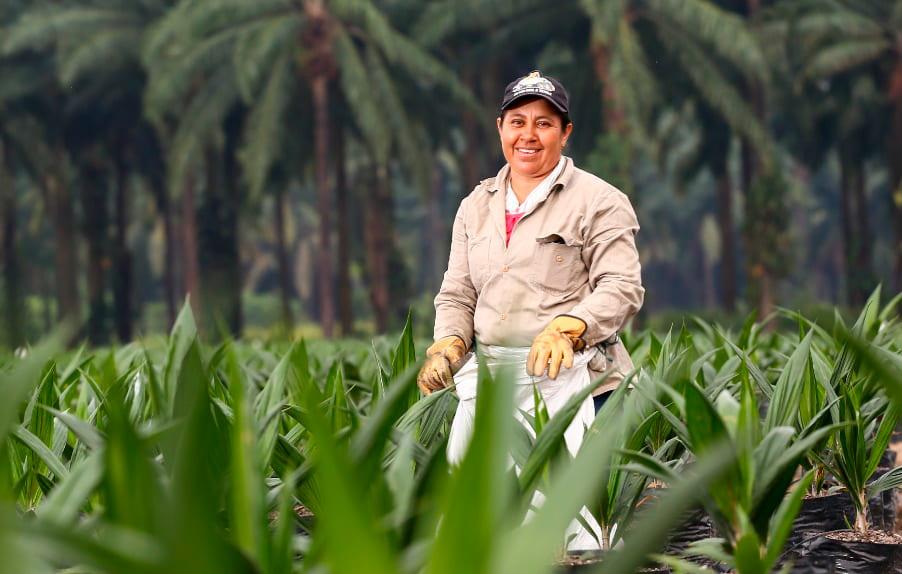 Agroexportaciones  Cultivo de palma