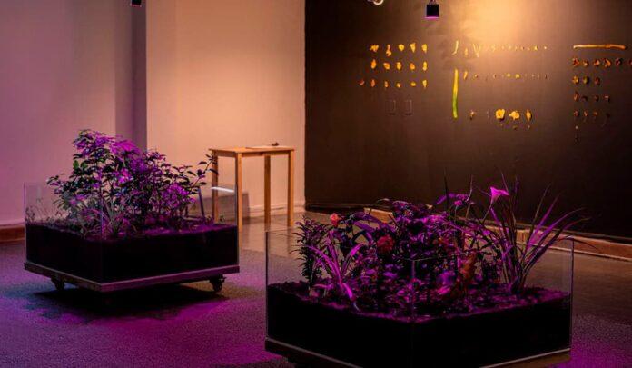 El 45º Salón Nacional de Artistas habla sobre paisaje